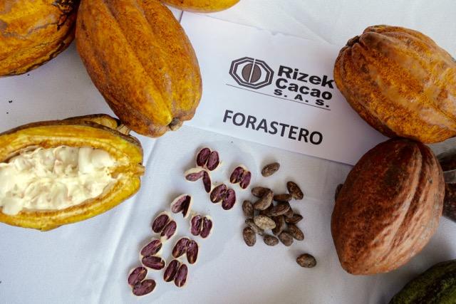 Succulent Chocolates_Cacao Plantation - 46.jpg