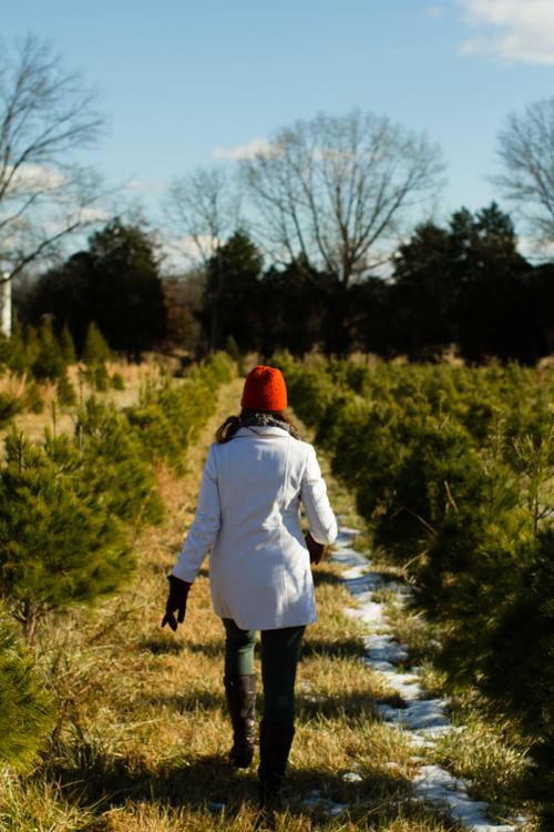 Christmastreefarm7
