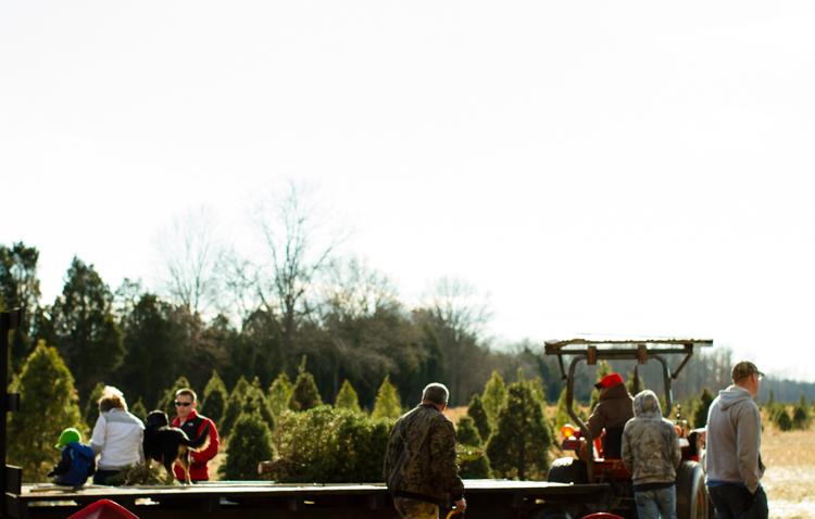 Christmastreefarm16