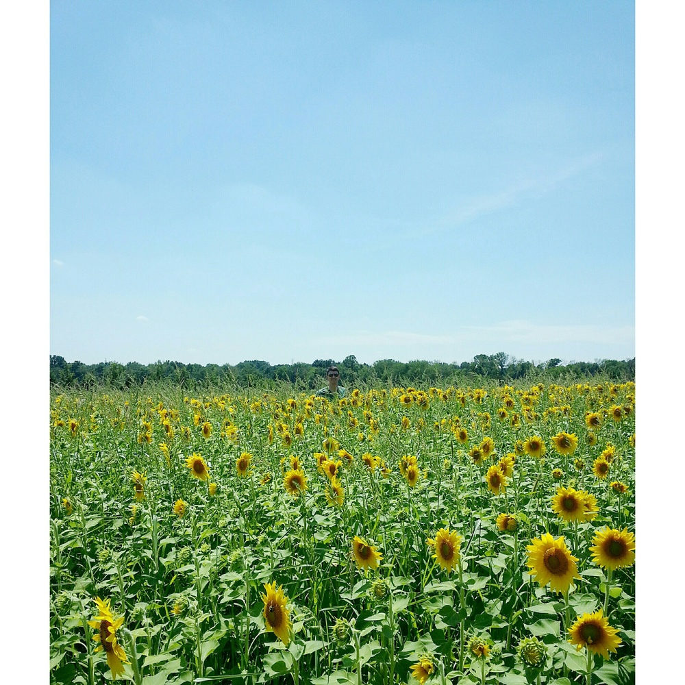 Sunflower Field Photo Shoot