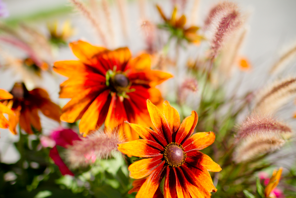 Fall flowers | Lorin Marie Photography