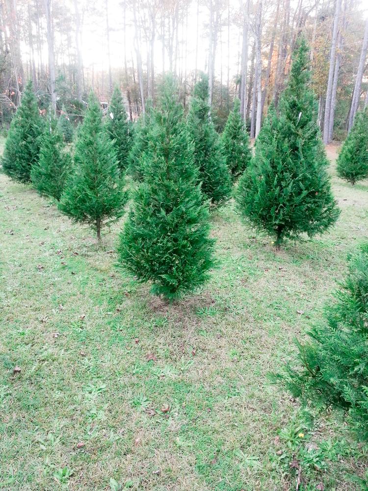 O-Christmas-Tree-1.jpg