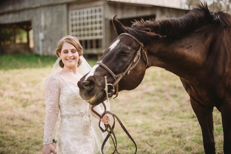 funny horse bridal