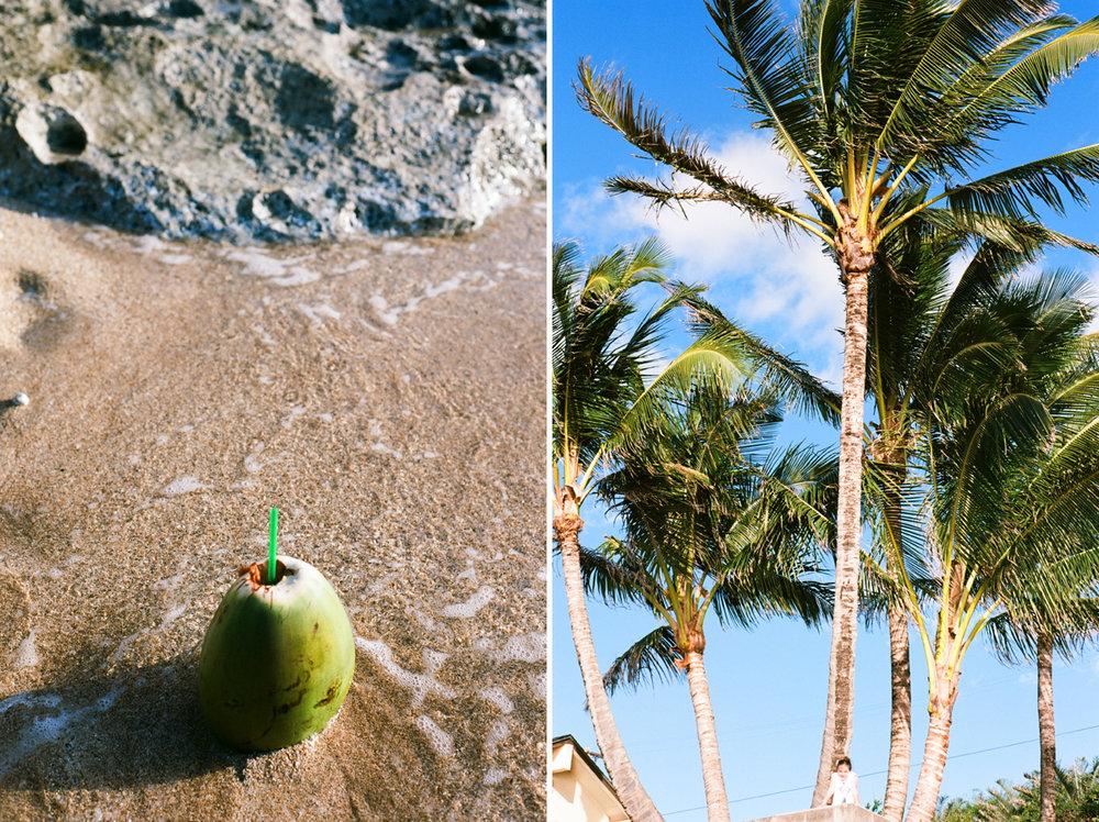 coconut hawaii