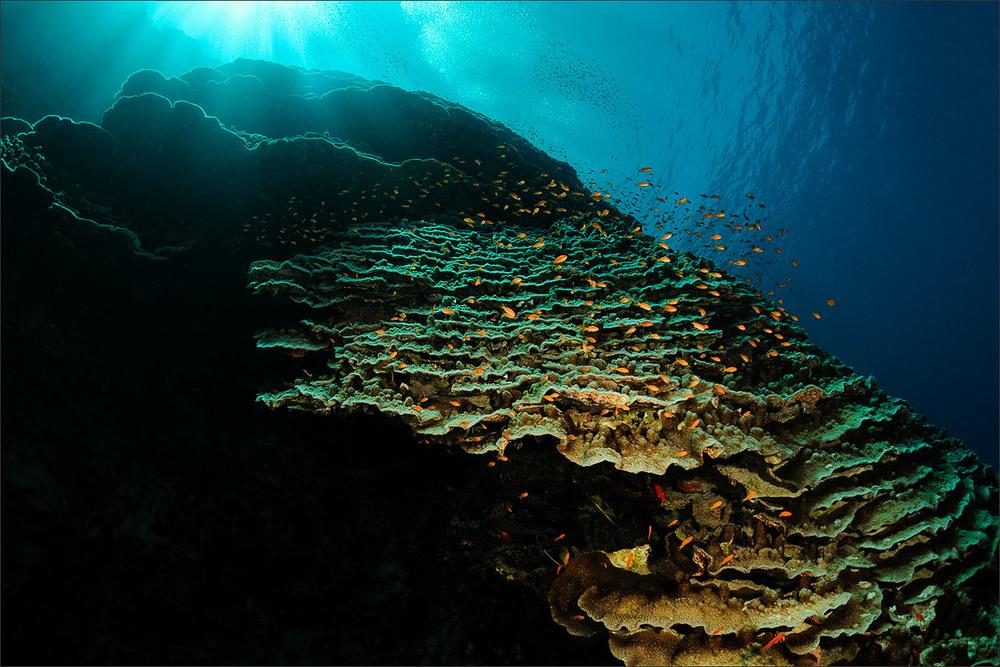 | egypt | red sea | daedalus reef | spot [•] northwest site