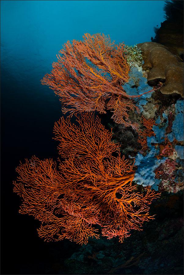 | indonesia | bunaken | bunaken marine park | spot[•] pante parigie