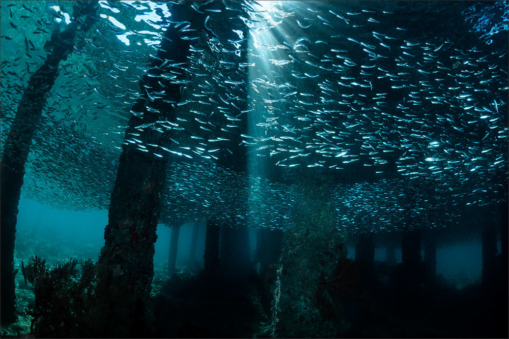 | indonesia | pulau banka | spot[•] jetty mutiara