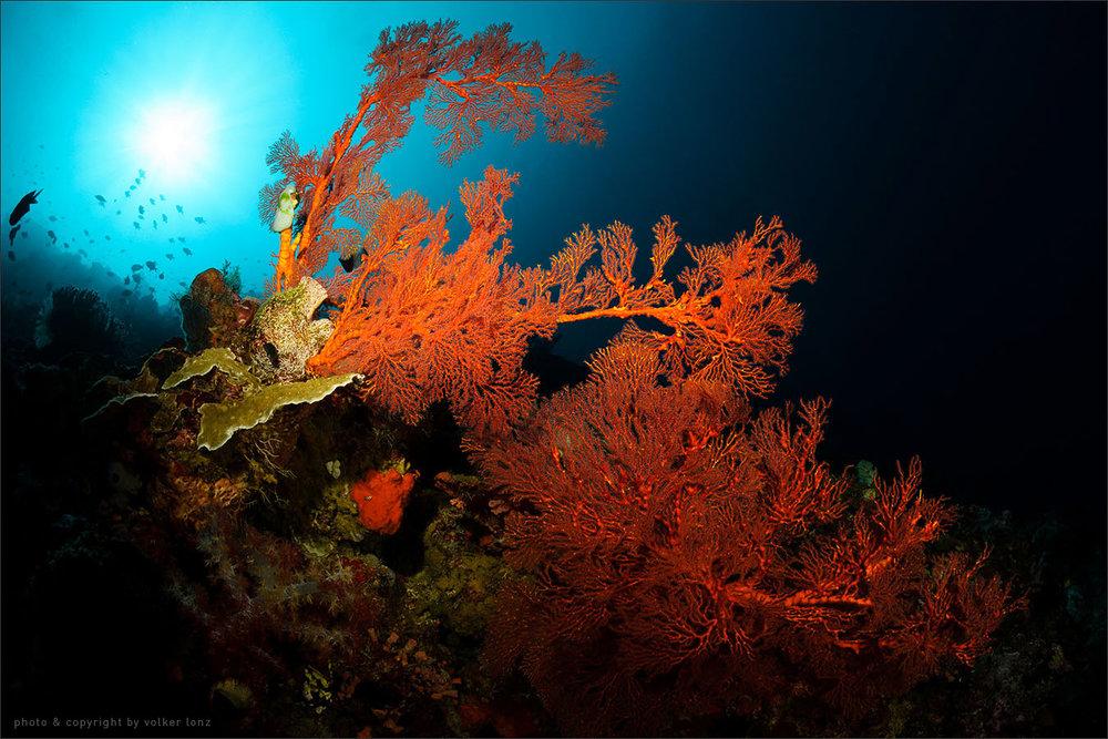| indonesia | bunaken | bunaken marine park | spot[•] lekuan 2
