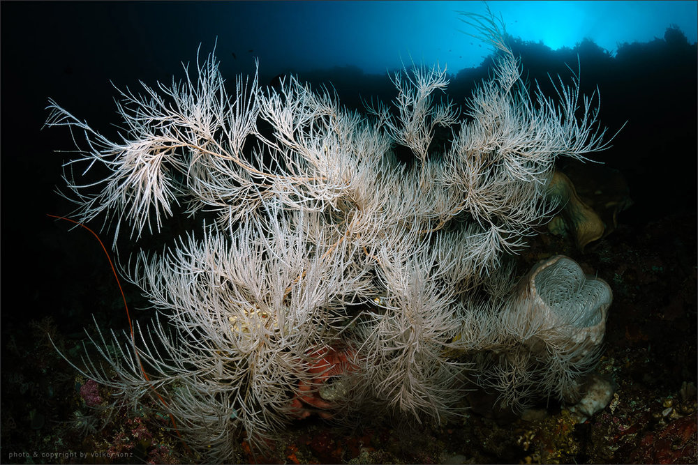 | indonesia | siladen | bunaken marine park | spot[•] siladen