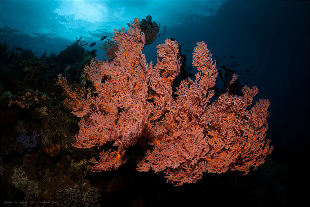 | indonesia | sulawesi | bunaken marine park | spot  [•]  dj point