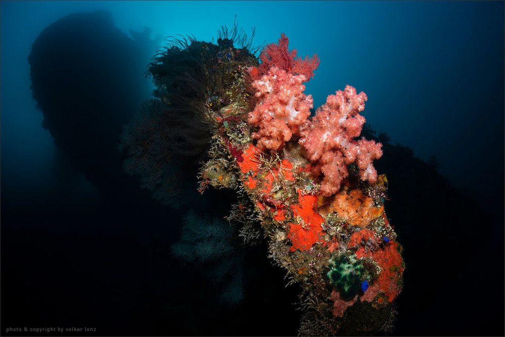 | indonesia | bali | tulamben | spot [•] liberty wreck