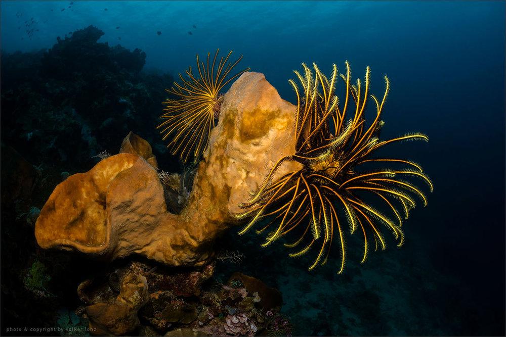 | indonesia | sulawesi | bunaken marine park | spot [•] abang point