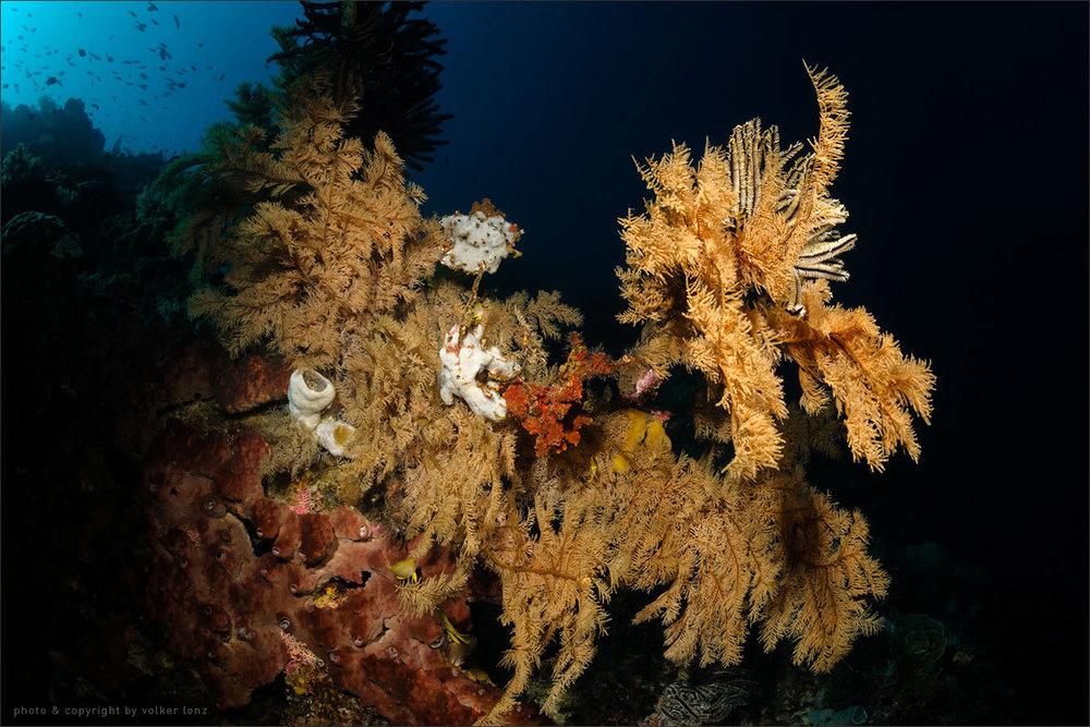 | indonesia | sulawesi | bunaken marine park | spot[•] siladen selatan