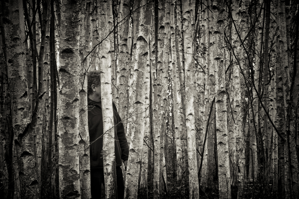 The Birches Near Skaneateles, N.Y.