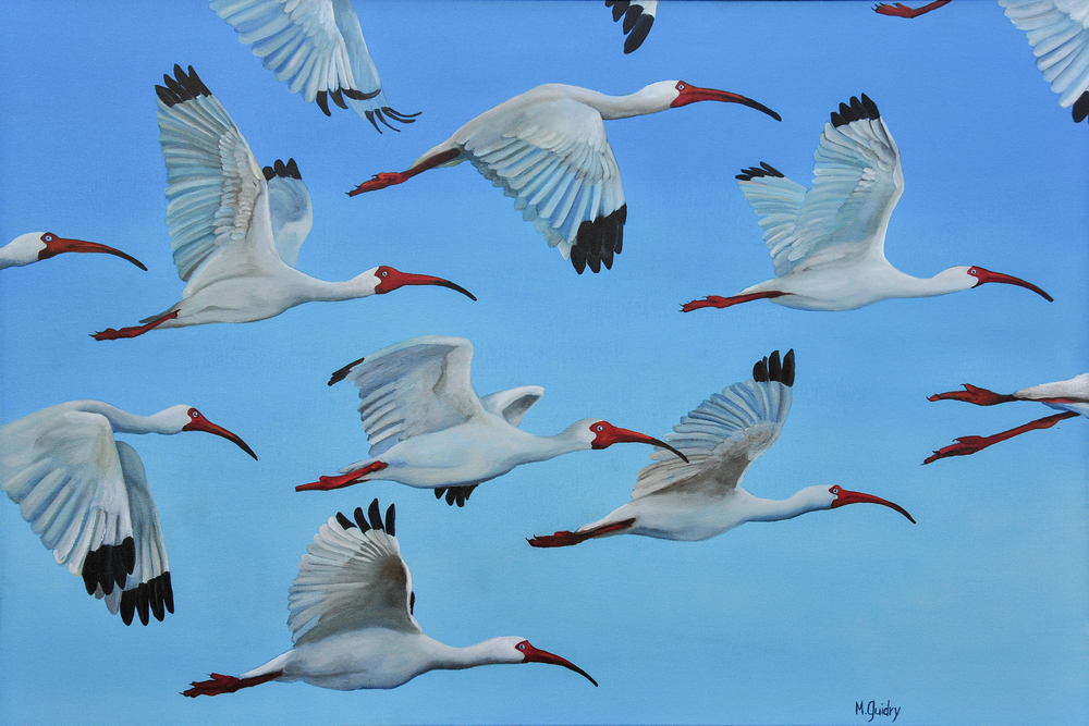 les_becs_croches_white_ibis__louisiana_m.guidry_michael_guidry_oil_painting_marsh_new_orleans_artist.jpg.jpg