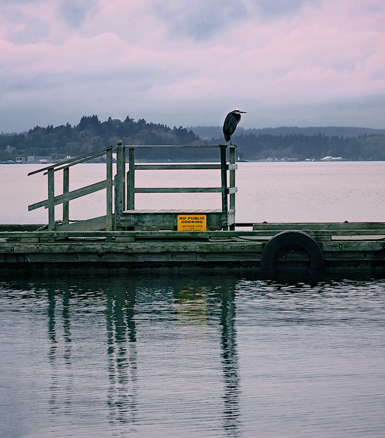 This old heron carefully guarded the moorage. Blake Island, Washington - Fujifilm XE-1, 18-55mm @ 55mm, ISO 200, f/4, 1/500.