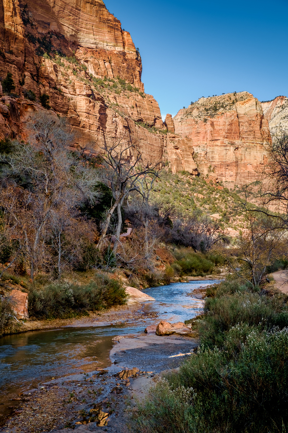 Virgin River -   The Virgin River winding through Zion Valley below Lady Mountain.   [ Fujifilm X100t, f/8, 1/250s, ISO 200 ]