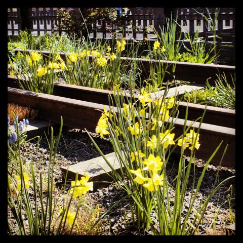 Yellow springtime flowers.