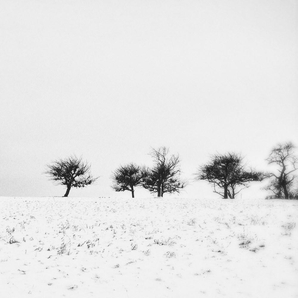 Savigny |1 décembre 2012