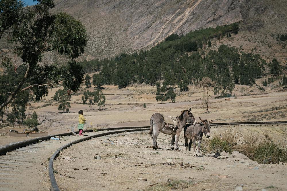 Tarabuco  - Bolivie