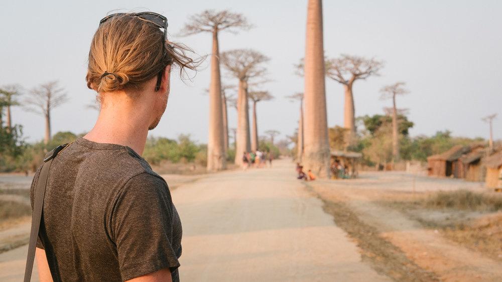 Allée des Baobabs  - Morondava, Madagascar.