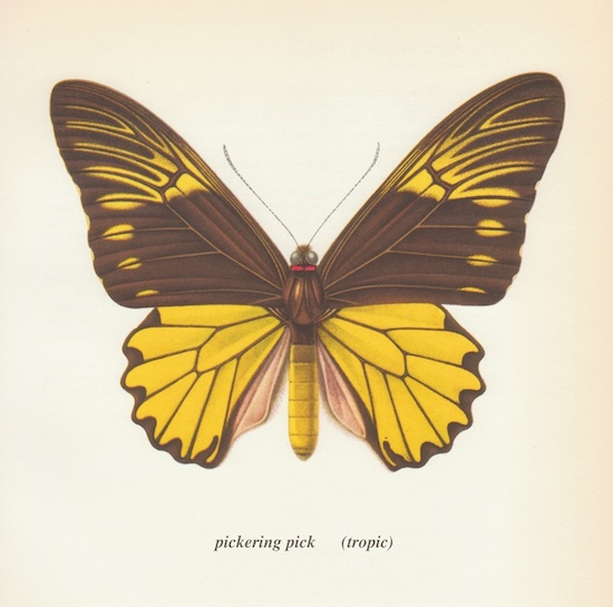 """(Tropic)"" - Pickering Pick    Click to Purchase CD or Download at Bandcamp   ~~~~~~"
