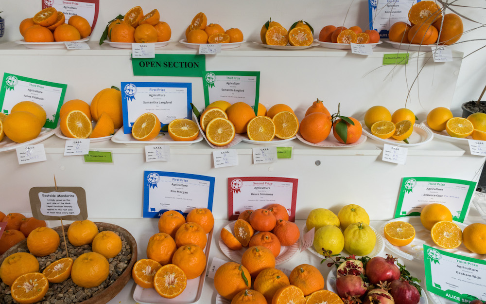 The Alice Show, fruit judging