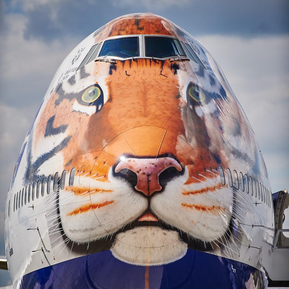 Tranasero Tiger livery