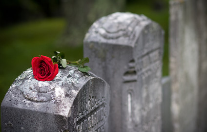 rose on stone.jpg