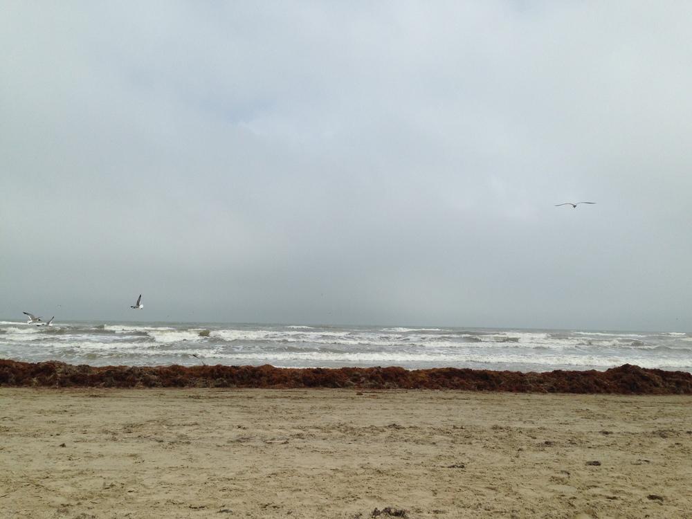 beach view (6).jpg