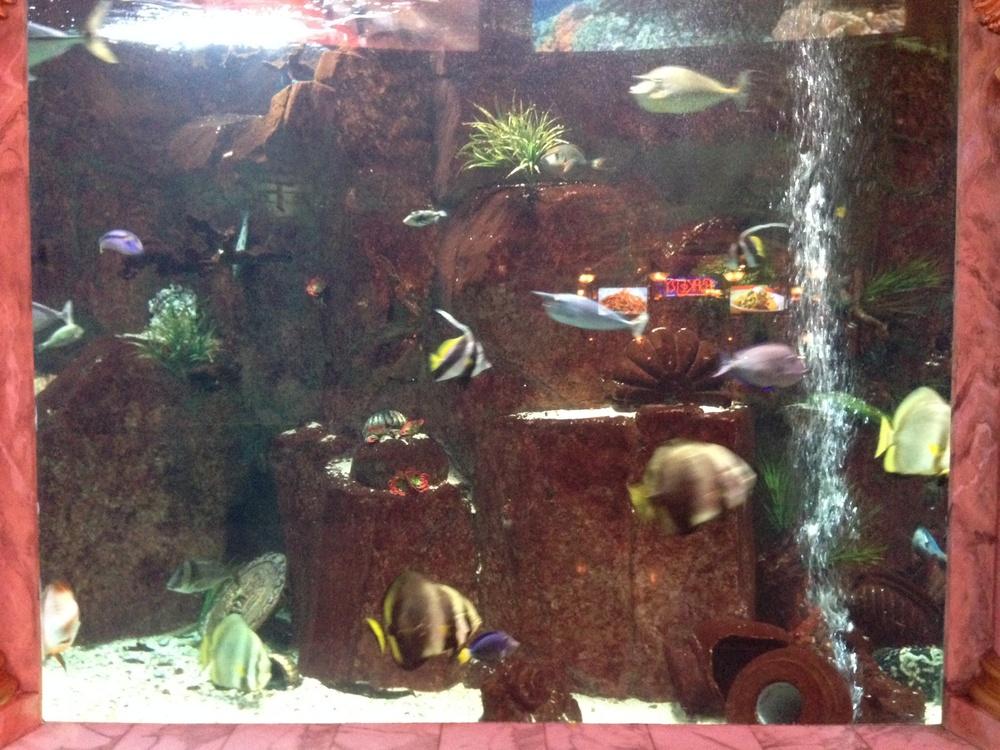 Aquarium at Shoppes at Caesar's