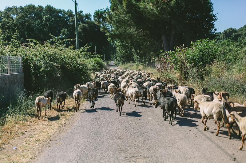CorsicaRoadtrip0160.jpg