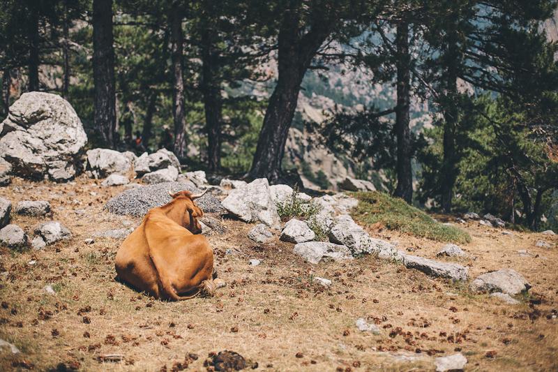 CorsicaRoadtrip0617.jpg
