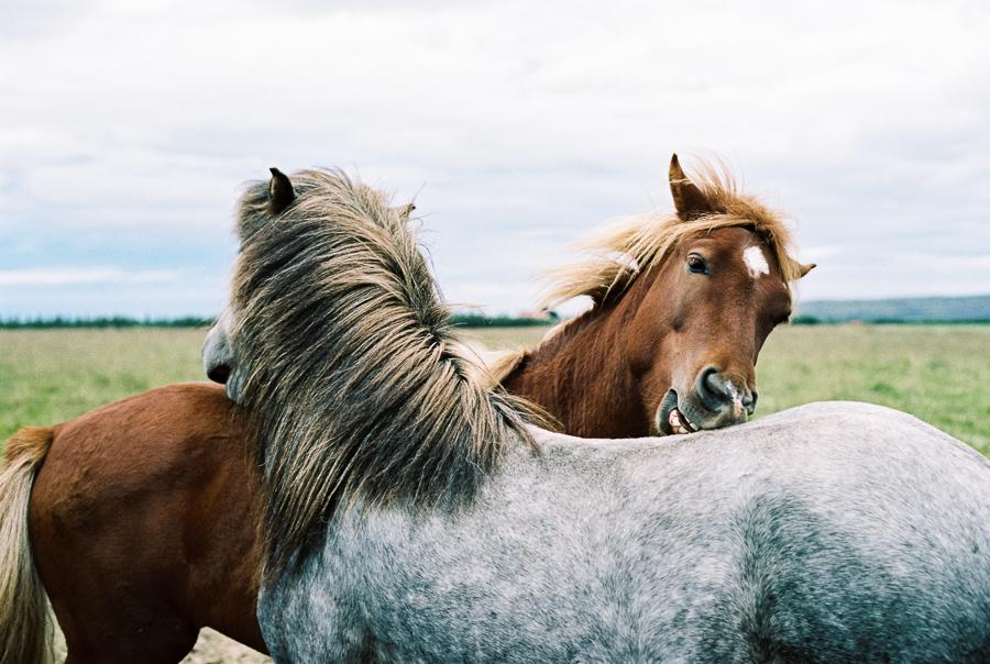 Iceland_2014-125.jpg