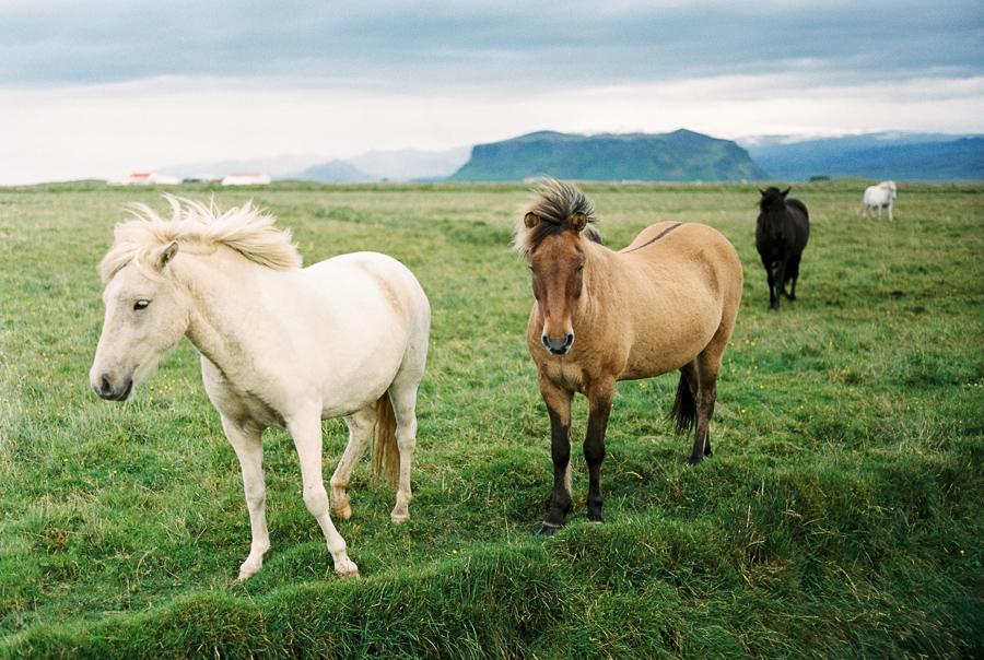 Iceland_2014-425-2.jpg
