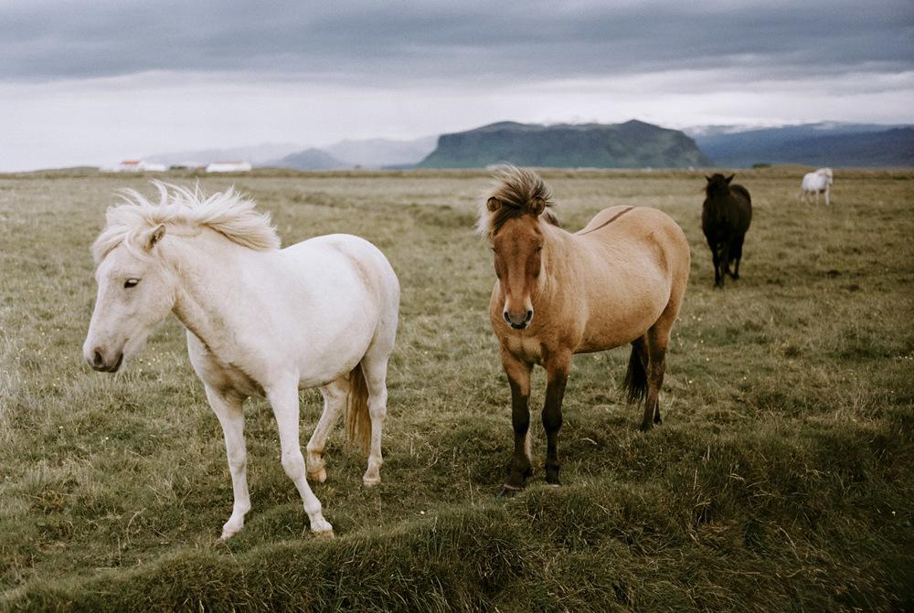 Iceland_2014-425.jpg