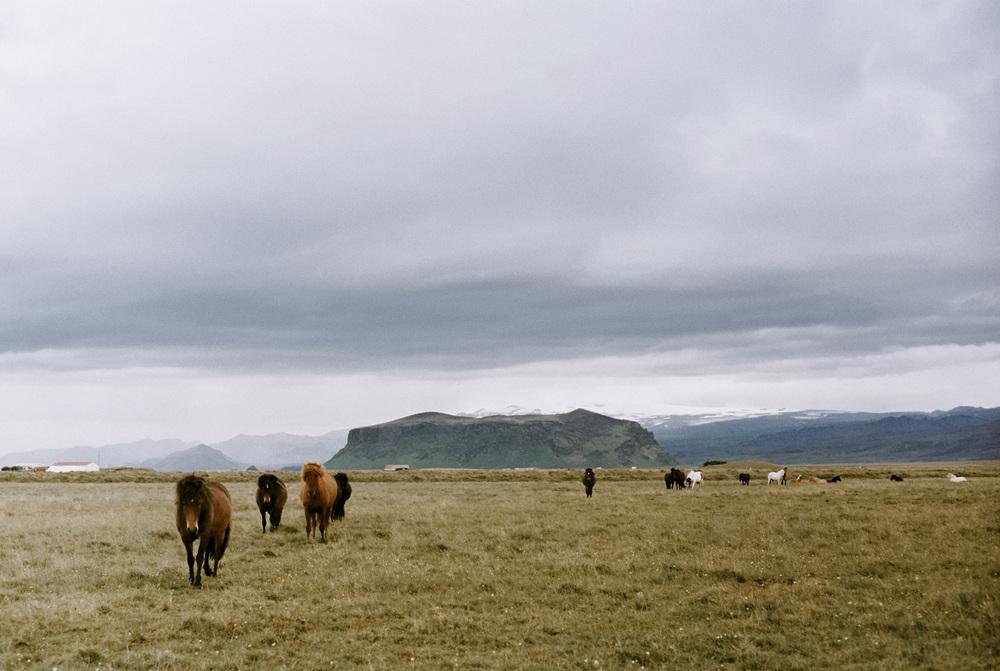 Iceland_2014-420.jpg