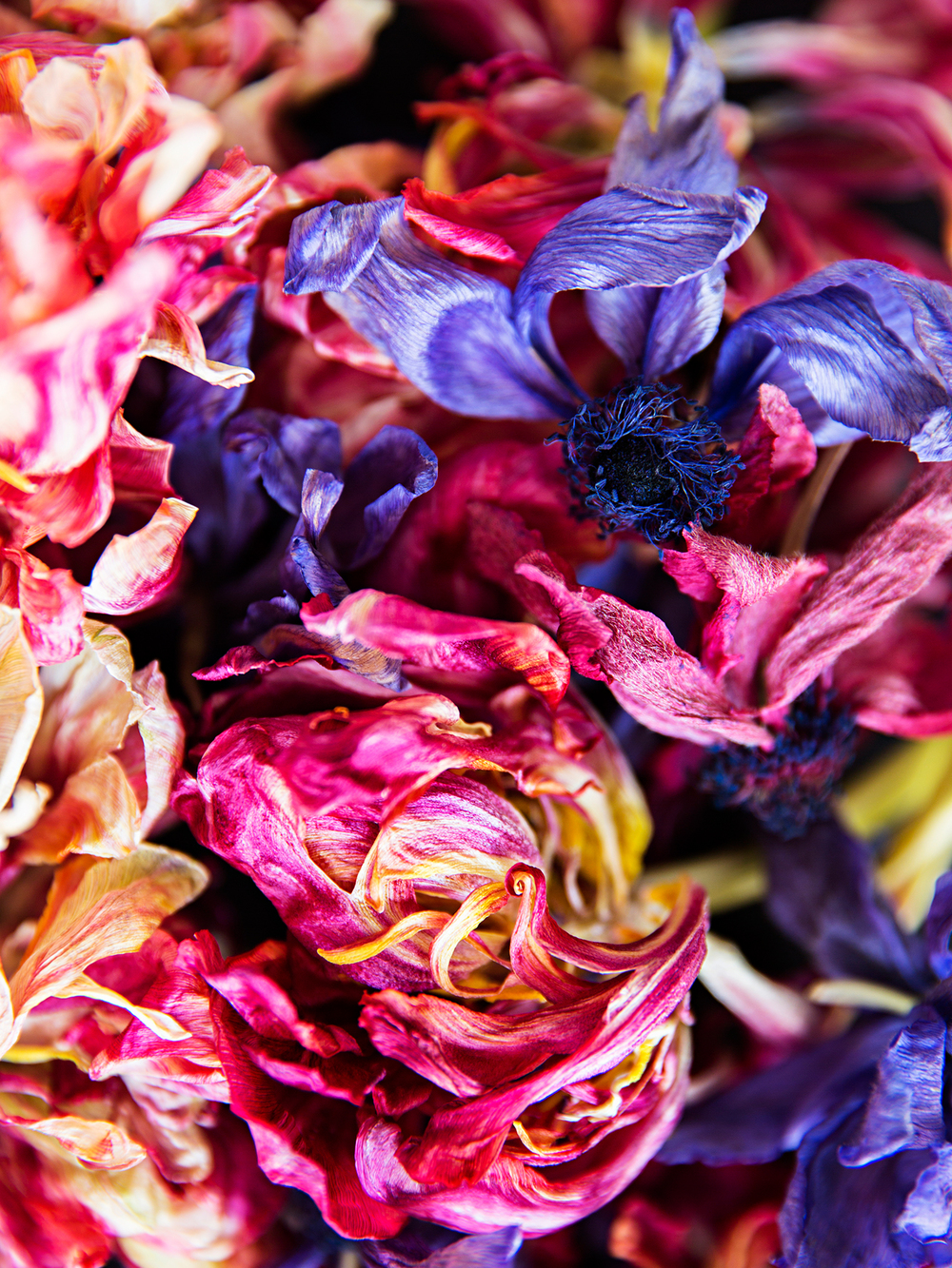 Les Fleurs Mortes 1