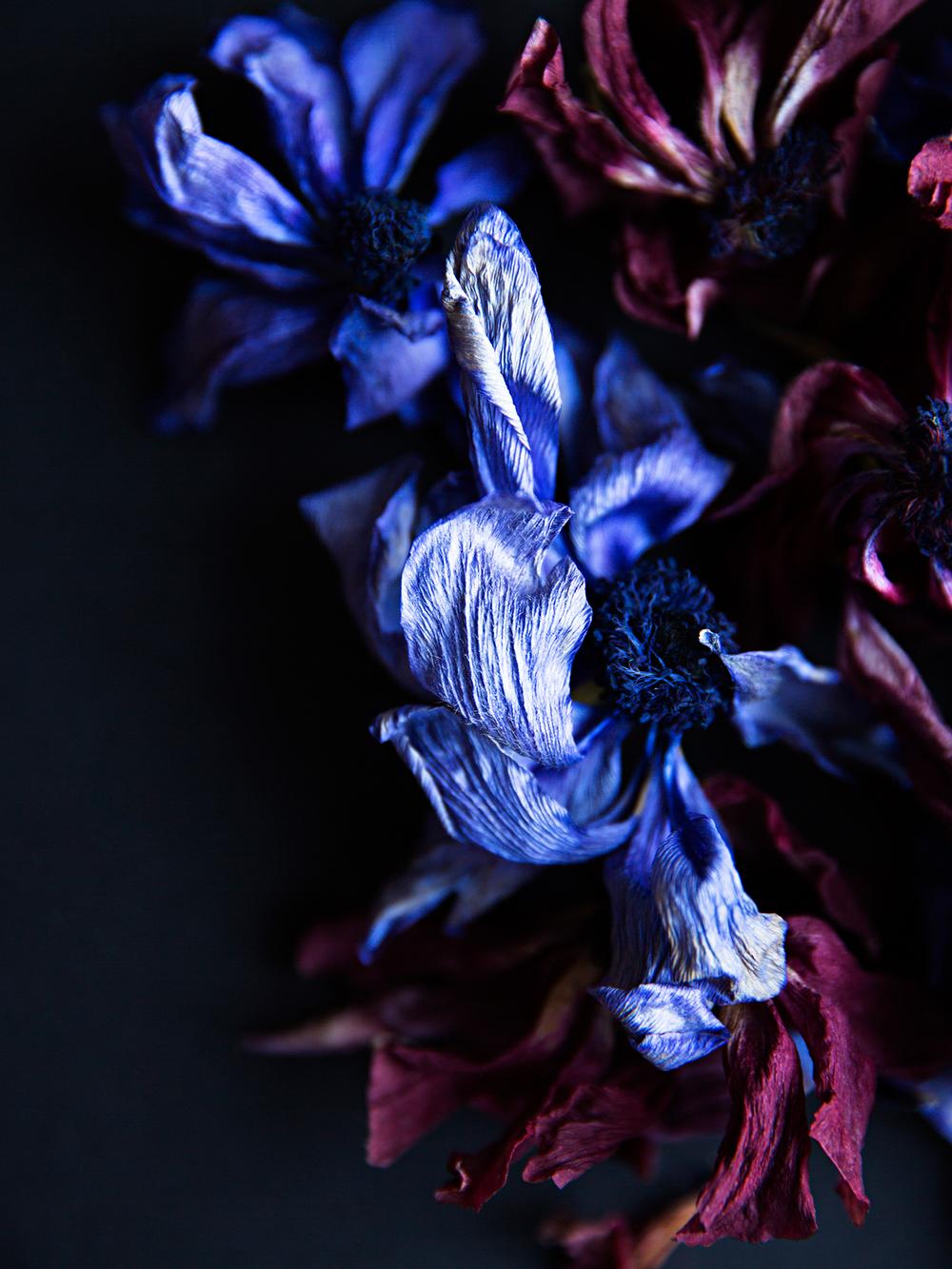Les Fleurs Mortes 2