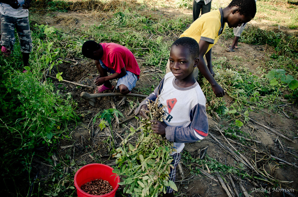 Malawian children learning how to grow their own food to create a stronger village.