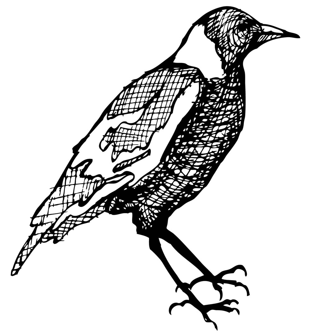 magpie_scan.jpeg