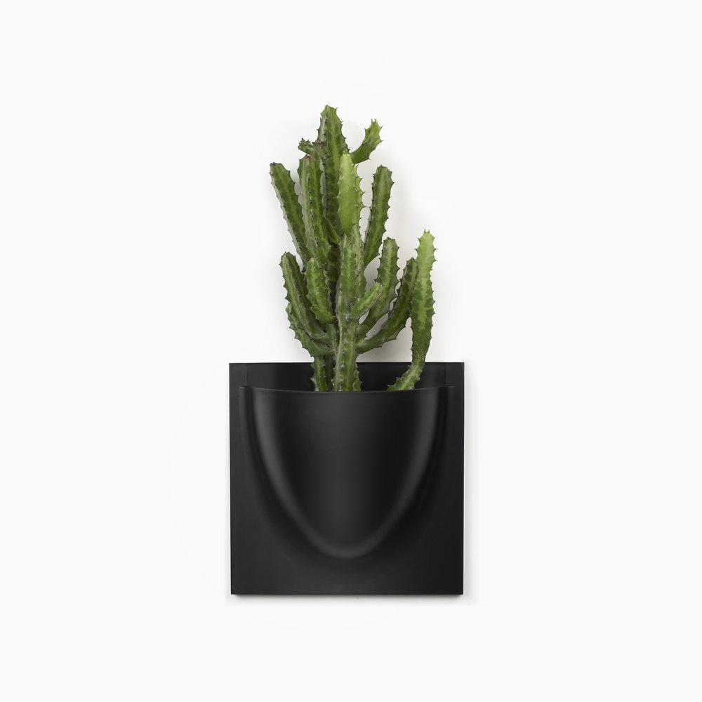 Sort VertiPlants Cowboy kaktus.jpg