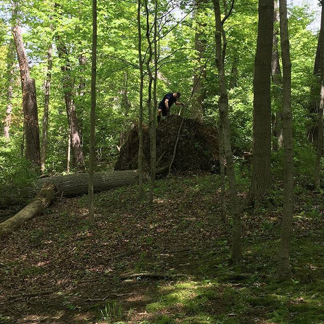 Giant tree fell across our path in the woods. Here I am trying to chop the root ball