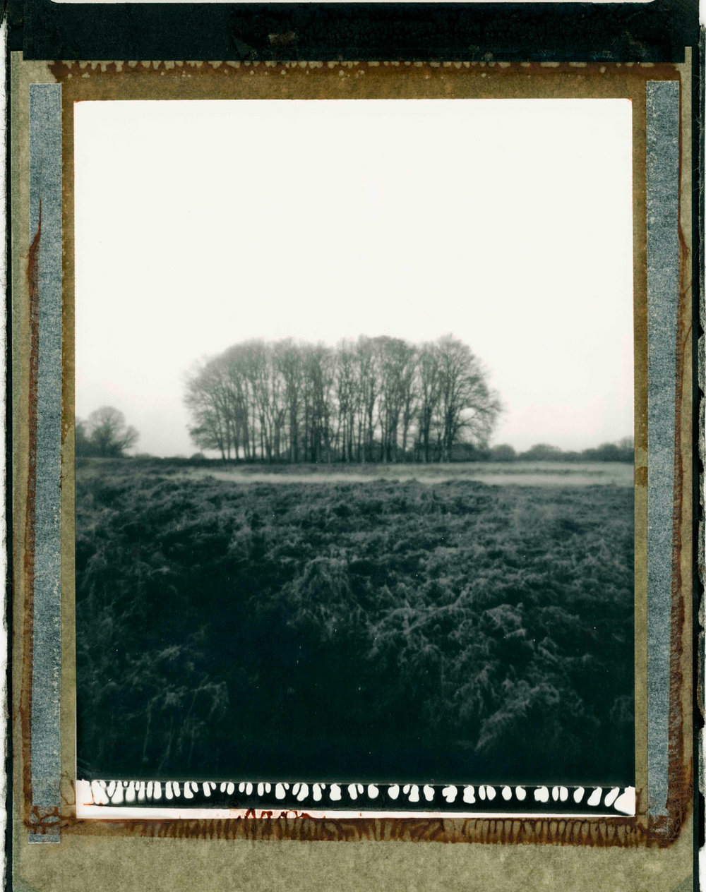 Polaroid Type55