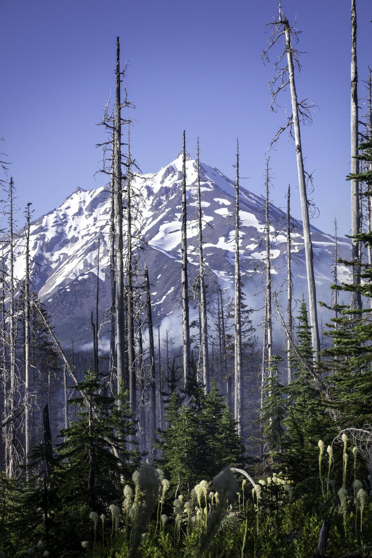 Bingham Ridge Fire-00524.jpg