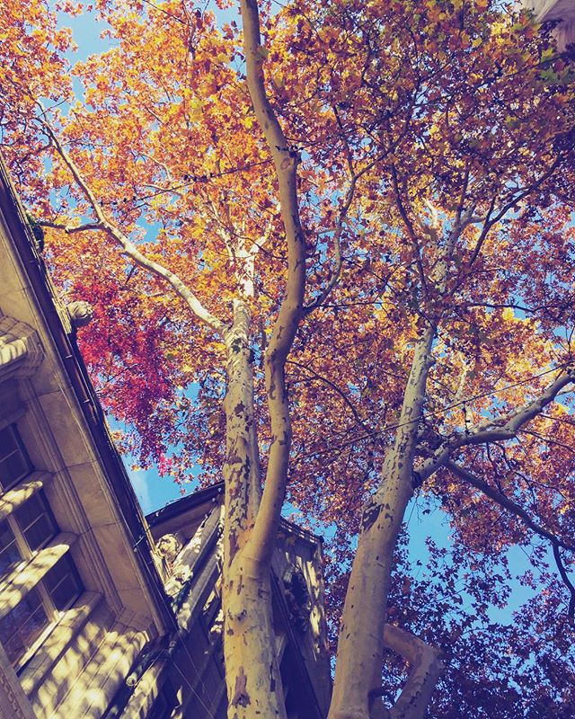 #Amazing #autumn #colours . . . . . . . #explore #vacation #tourism #tourist #instatrip #traveling #travelphotography #travelpic #travelphoto #travelblog #travelblgger #travelgram