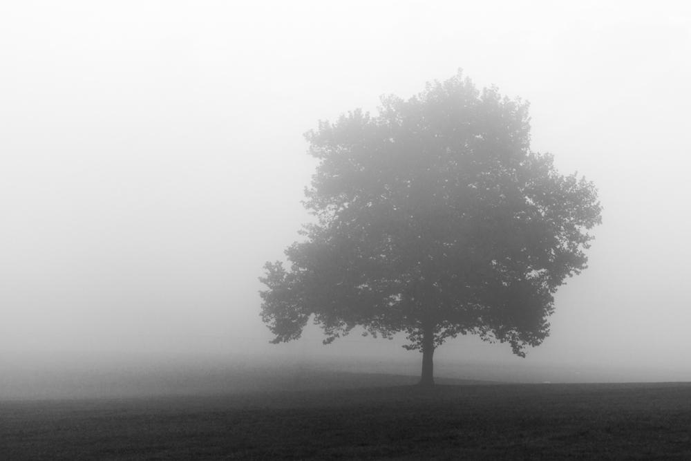 Lone Tree BW.jpg