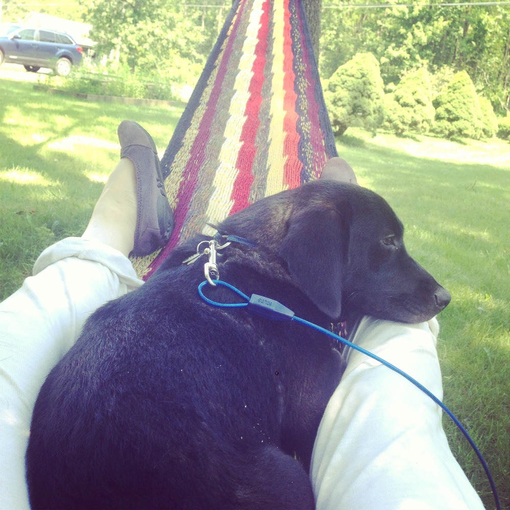 Hound dog in a hammock.