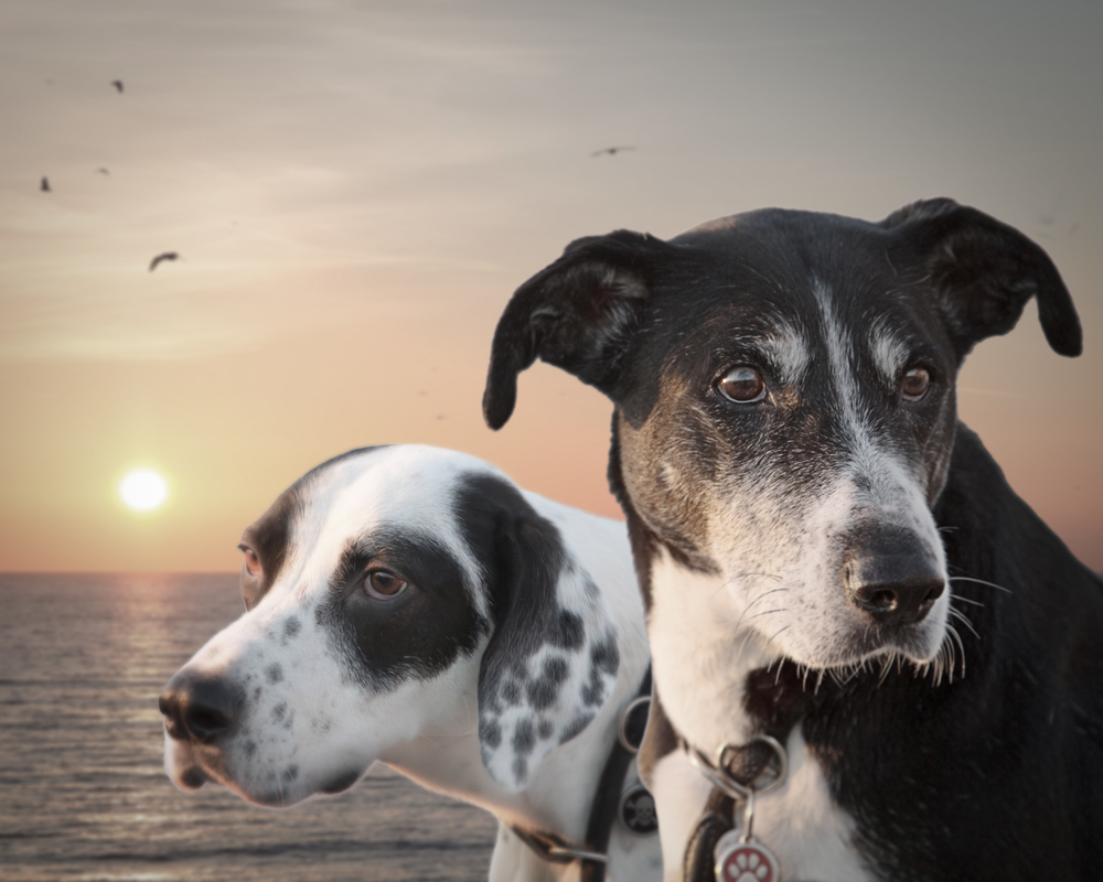 dogs on beach © James McDonald 2015-8.jpg