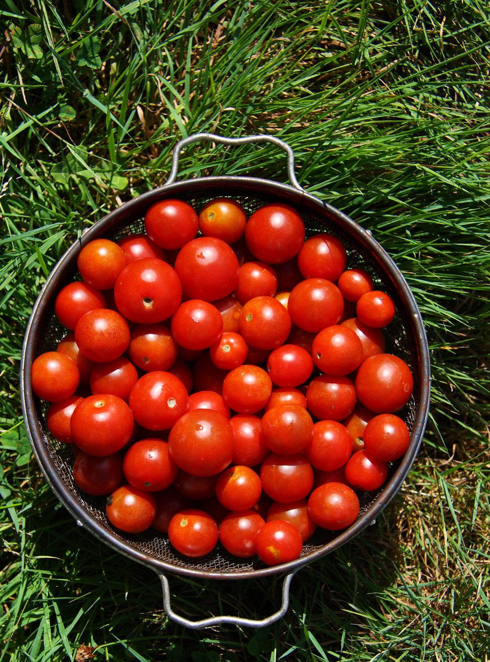 cherry-tomatoes-2.jpg